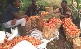 Coping with small holder agriculture amidst the COVID-19