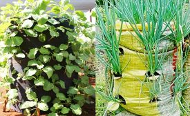 Vertical Bag Gardening for Healthy Diets in the Wake of COVID-19 Pandemic