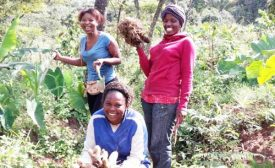 Gender roles in Climate Smart Agriculture in Cameroon