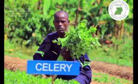 Youth in Climate Smart horticulture/vegetable production