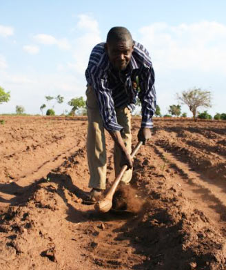 Farmer field day for knowledge sharing in Malawi